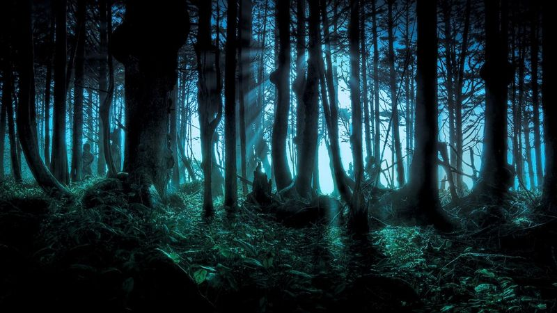 Scary-hollawen-forest-pacific-northwest-halloween-holiday-187962